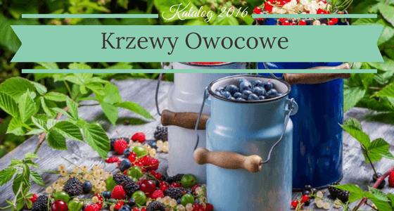 Krzewy owocowe Katalog Krzewów owocowych 2016